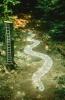A.J.Randall Snake and Ladder trail artwork